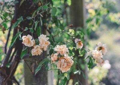 gardener-14